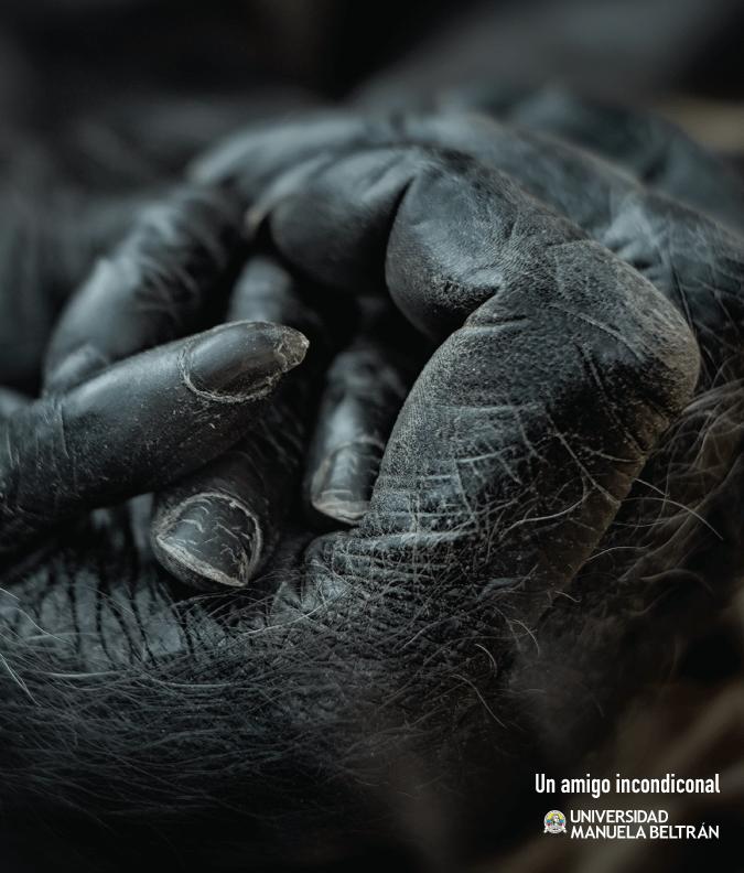 gorila-mnb